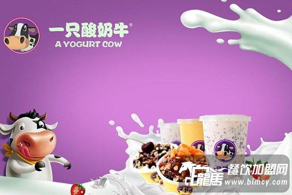 据说一只酸奶牛加盟费好高,是真的?